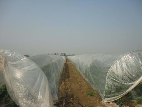 Green House Tunnels (4)