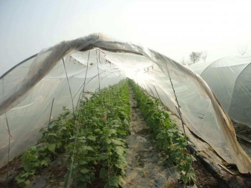 Green House Tunnels (12)