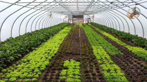Green House Tunnels (11)