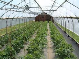 Green House Tunnels (6)