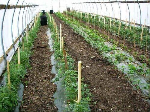 Green House Tunnels (7)