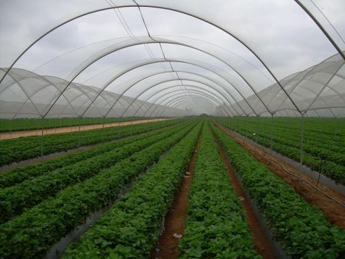 Green House Tunnels (8)