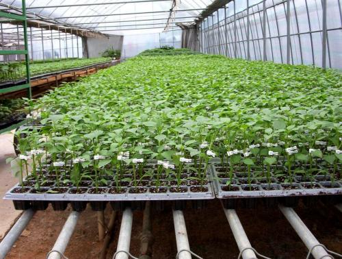 Green House Tunnels (9)